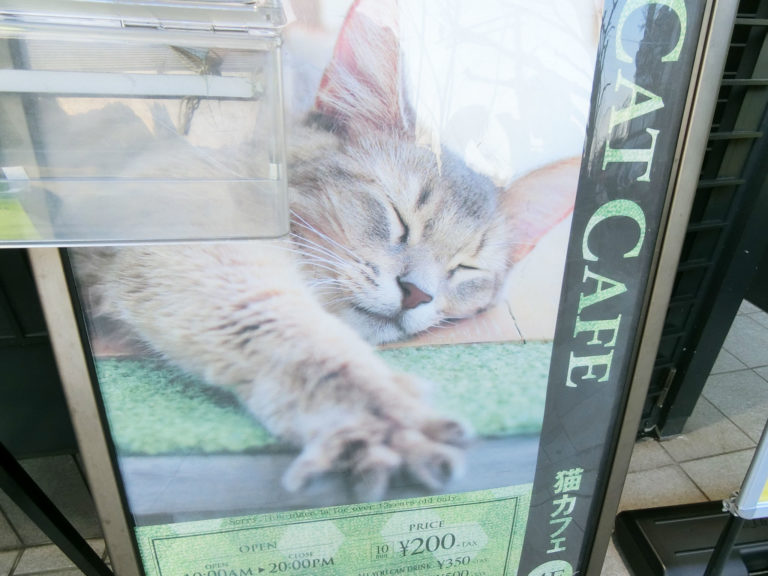 トイトイトイクリニック-猫カフェ
