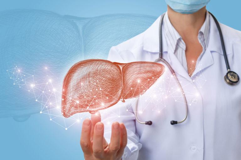 肝臓と医師の画像